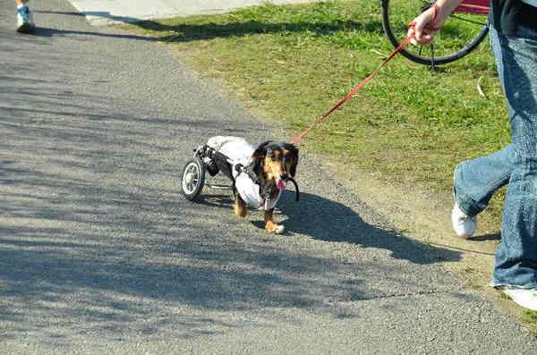 ガンバリ犬.jpg