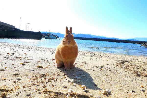 浜辺.jpg