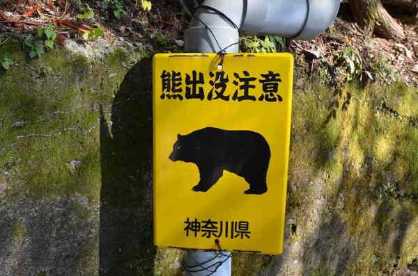 熊出没.jpg