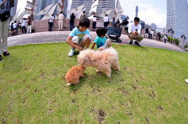 犬11.jpg