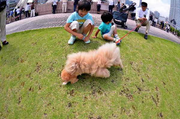 犬12.jpg