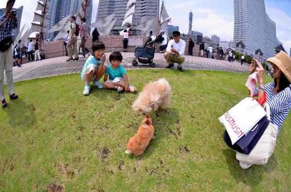 犬16.jpg