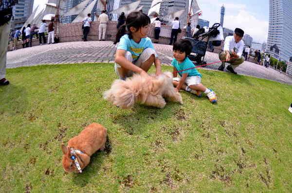 犬6.jpg