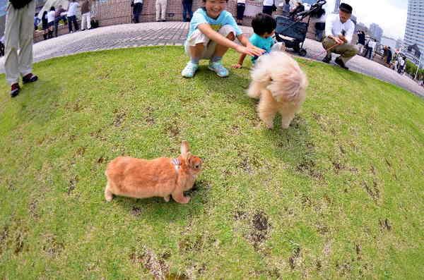犬8.jpg