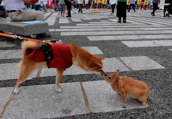駒沢公園.jpg